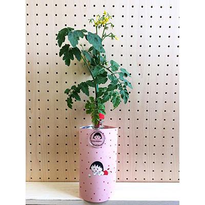 ちびまる子ちゃん×petomato「プチトマト」「四季なりいちご」[えだまめ」 商品画像