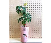 ちびまる子ちゃん×petomato「プチトマト」「四季なりいちご」[えだまめ」